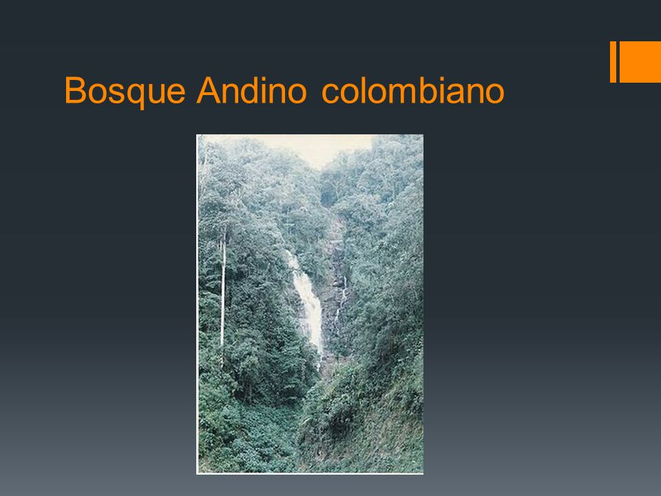 Bosque Andino colombiano