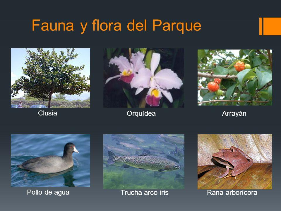 Fauna y flora del Parque