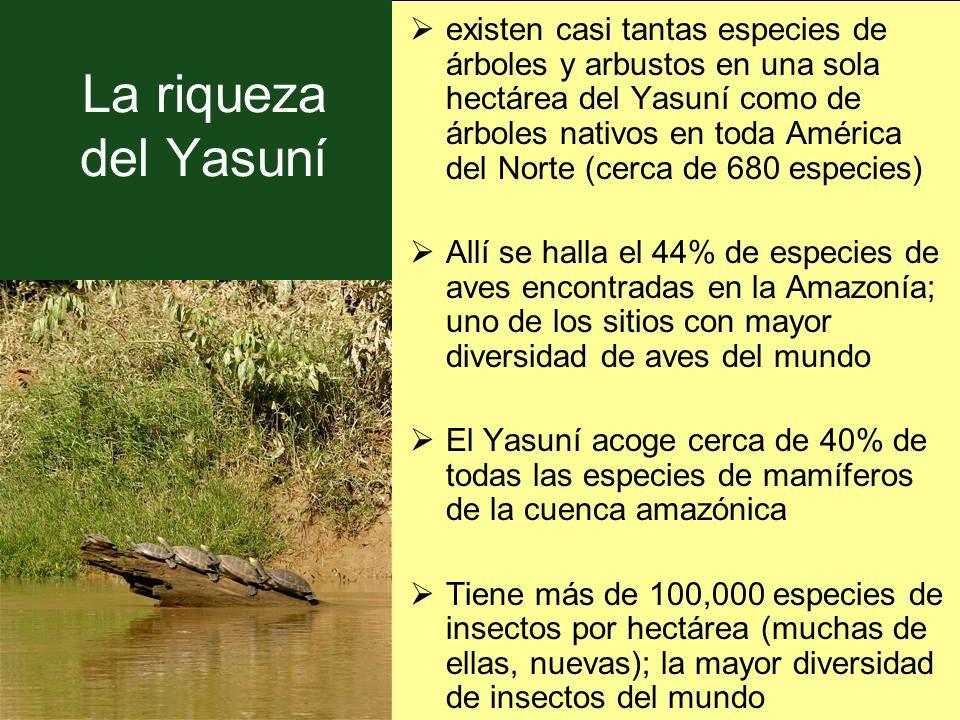 existen casi tantas especies de árboles y arbustos en una sola hectárea del Yasuní como de árboles nativos en toda América del Norte (cerca de 680 especies)
