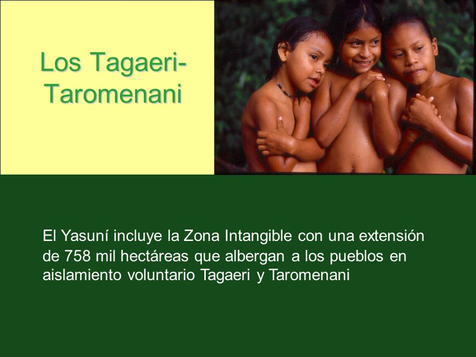 Los Tagaeri-Taromenani