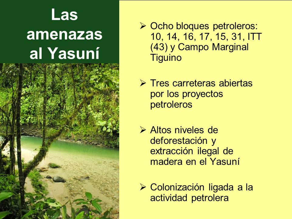 Las amenazas al Yasuní Ocho bloques petroleros: 10, 14, 16, 17, 15, 31, ITT (43) y Campo Marginal Tiguino.