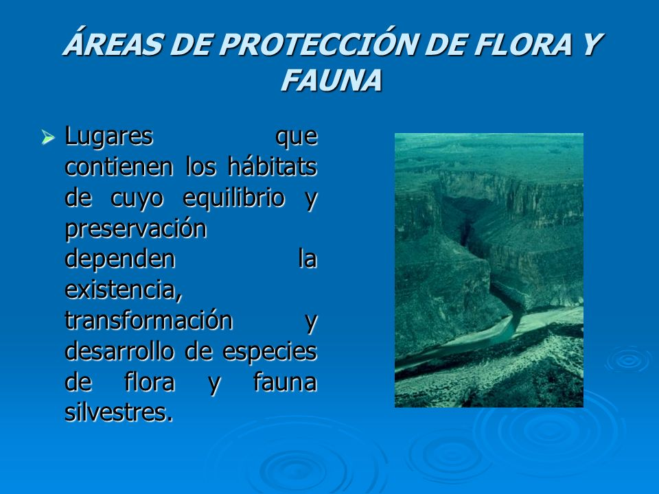 ÁREAS DE PROTECCIÓN DE FLORA Y FAUNA