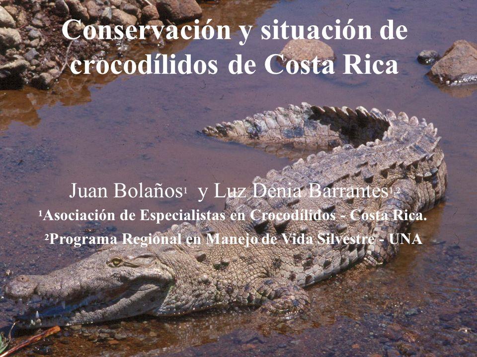 Conservación y situación de crocodílidos de Costa Rica