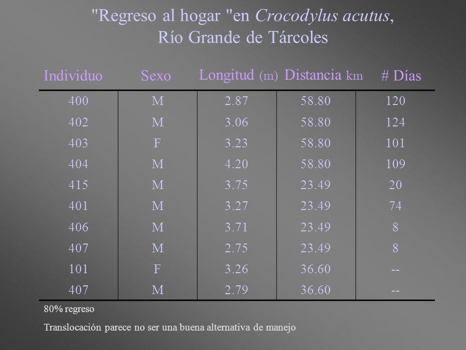 Regreso al hogar en Crocodylus acutus, Río Grande de Tárcoles