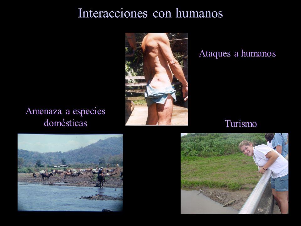 Interacciones con humanos