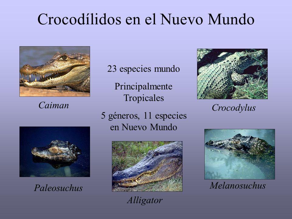 Crocodílidos en el Nuevo Mundo