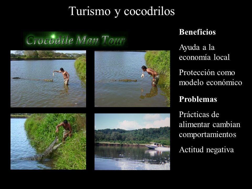 Turismo y cocodrilos Beneficios Ayuda a la economía local