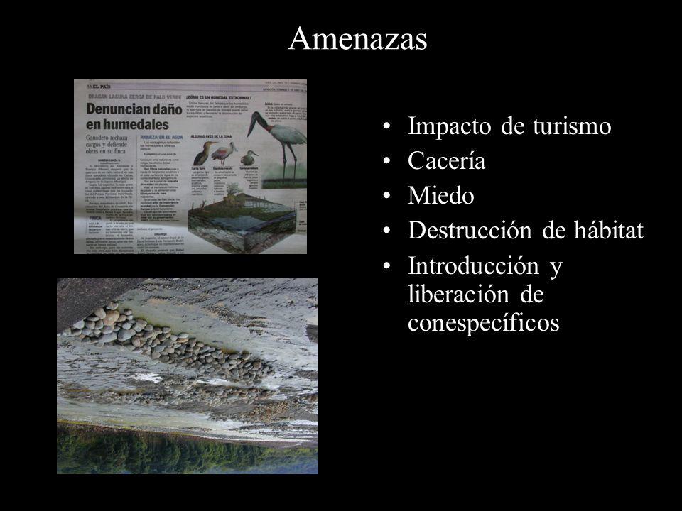 Amenazas Impacto de turismo Cacería Miedo Destrucción de hábitat