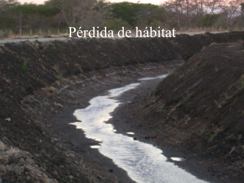 Pérdida de hábitat
