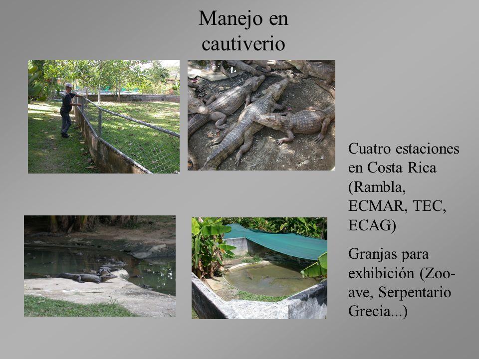 Manejo en cautiverio Cuatro estaciones en Costa Rica (Rambla, ECMAR, TEC, ECAG) Granjas para exhibición (Zoo-ave, Serpentario Grecia...)