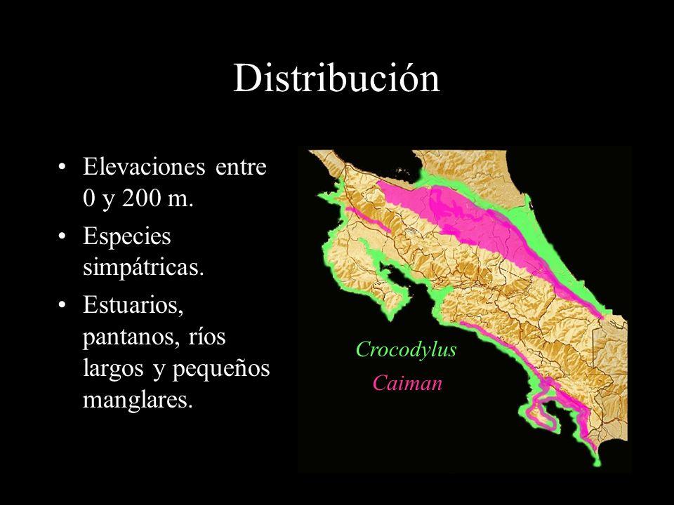 Distribución Elevaciones entre 0 y 200 m. Especies simpátricas.
