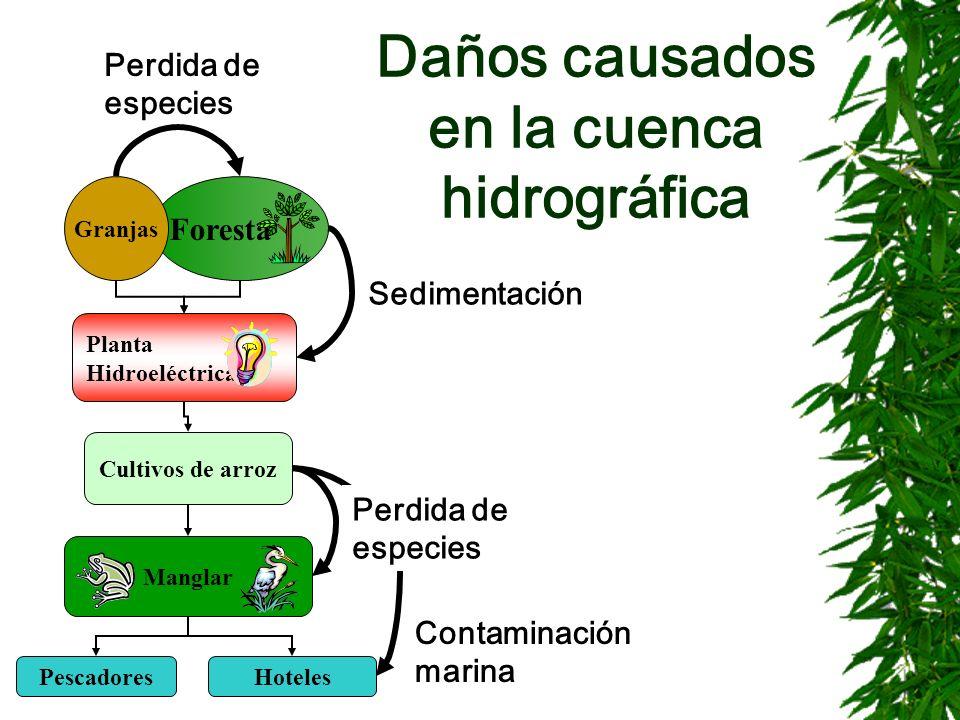 Daños causados en la cuenca hidrográfica