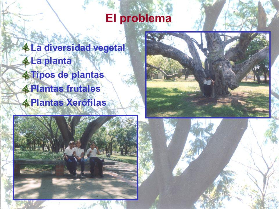 El problema La diversidad vegetal La planta Tipos de plantas