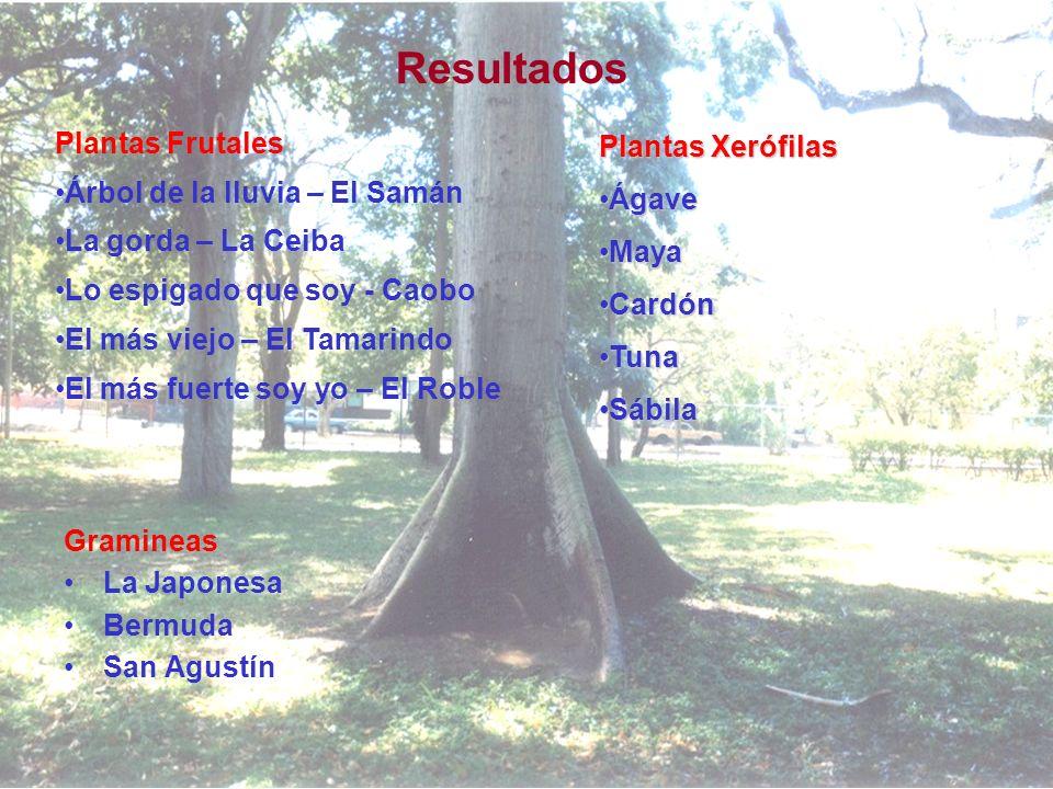 Resultados Plantas Frutales Árbol de la lluvia – El Samán