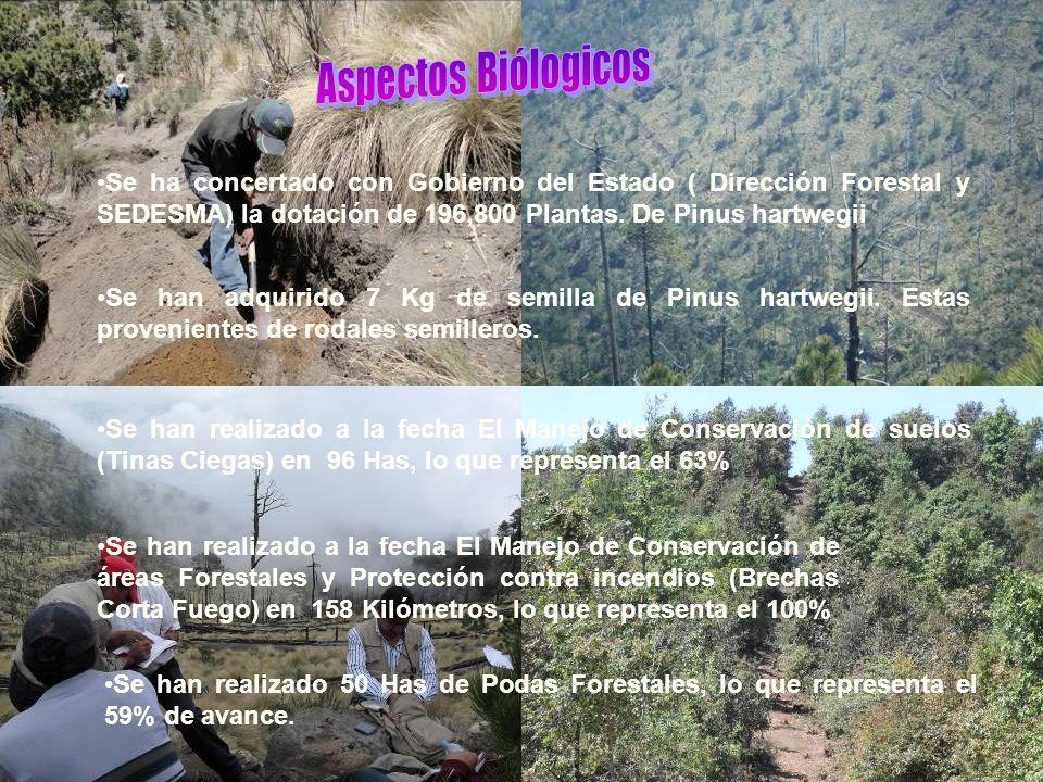 Aspectos Biólogicos Se ha concertado con Gobierno del Estado ( Dirección Forestal y SEDESMA) la dotación de 196,800 Plantas. De Pinus hartwegii.