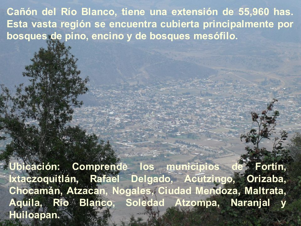 Cañón del Río Blanco, tiene una extensión de 55,960 has