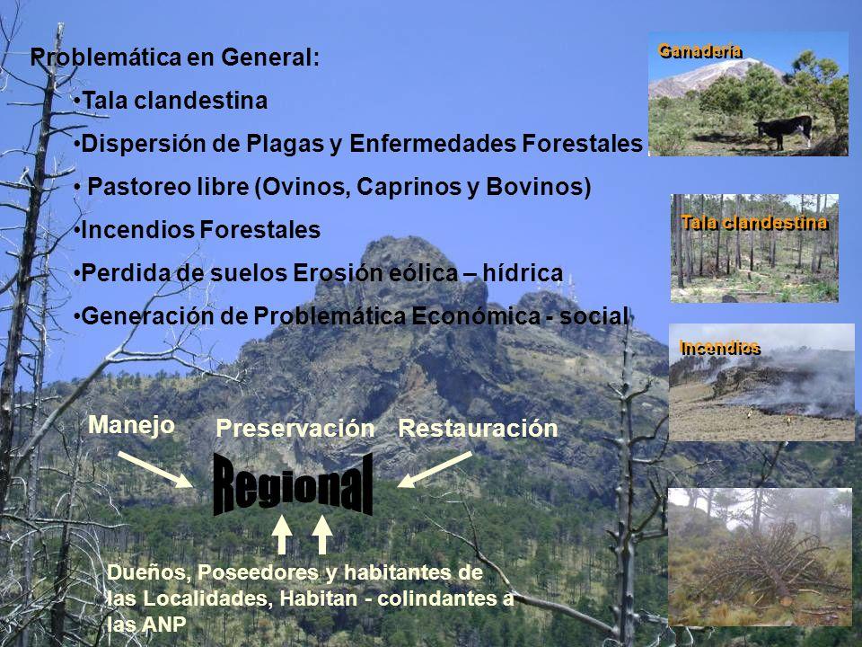 Regional Manejo Preservación Restauración Problemática en General: