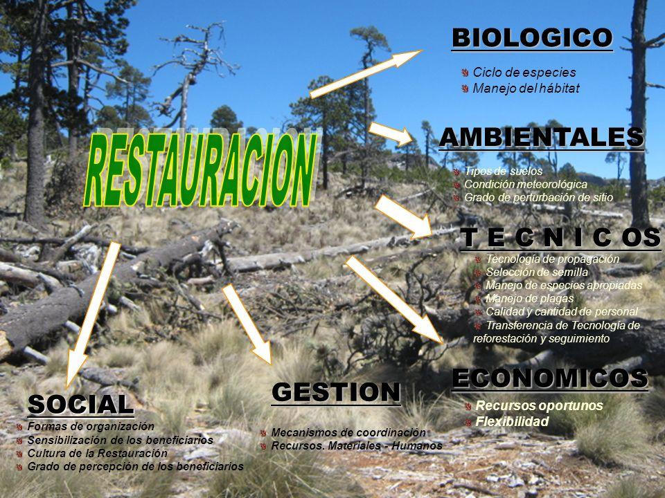 BIOLOGICO AMBIENTALES RESTAURACION T E C N I C OS ECONOMICOS GESTION