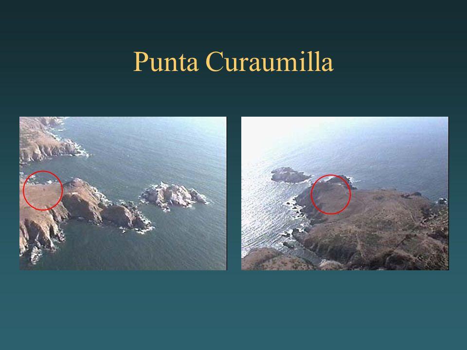 Punta Curaumilla