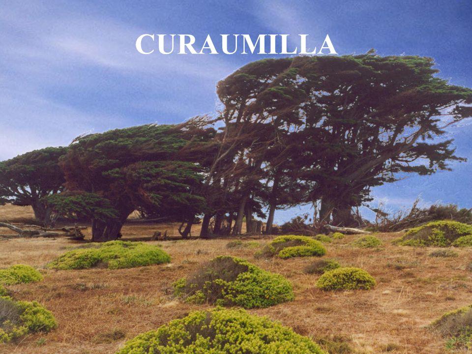 CURAUMILLA