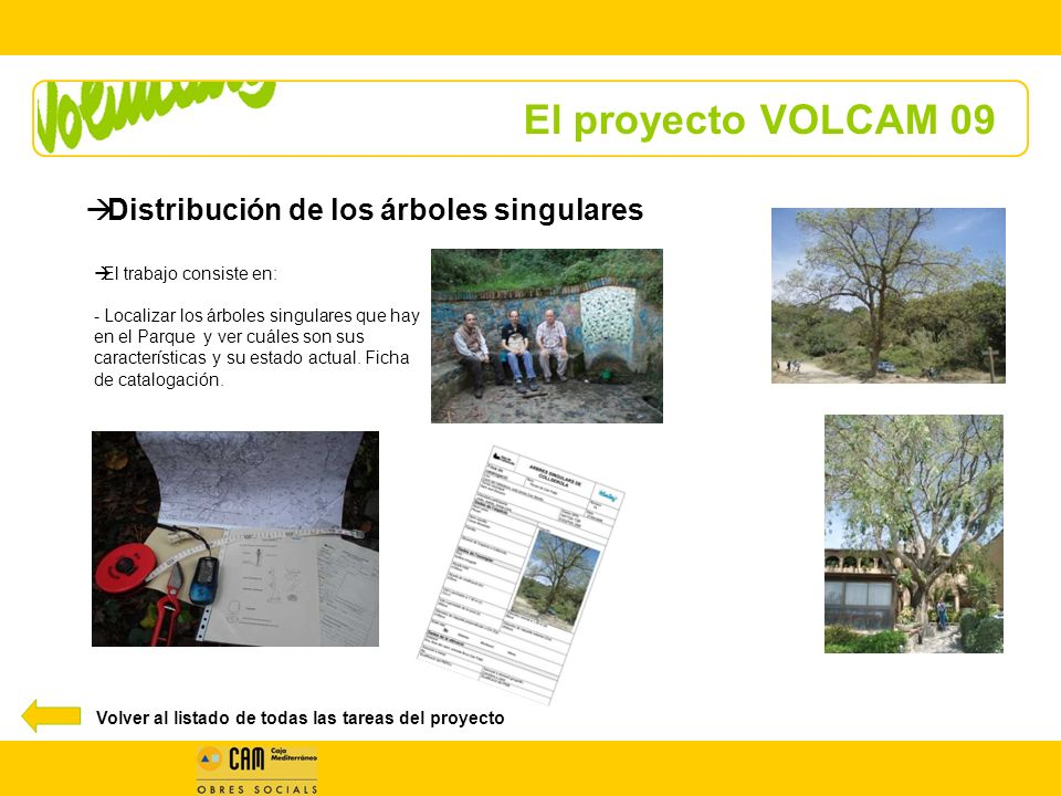 El proyecto VOLCAM 09 Distribución de los árboles singulares