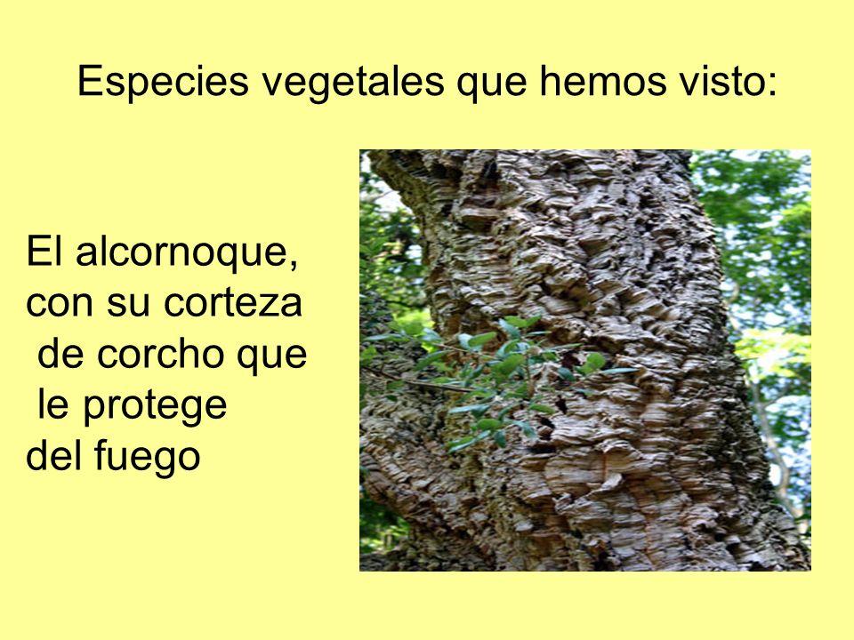 Especies vegetales que hemos visto: