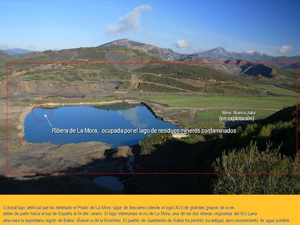 Colosal lago artificial que ha destruido el Prado de La Mora, lugar de descanso (desde el siglo XVI) de grandes grupos de aves