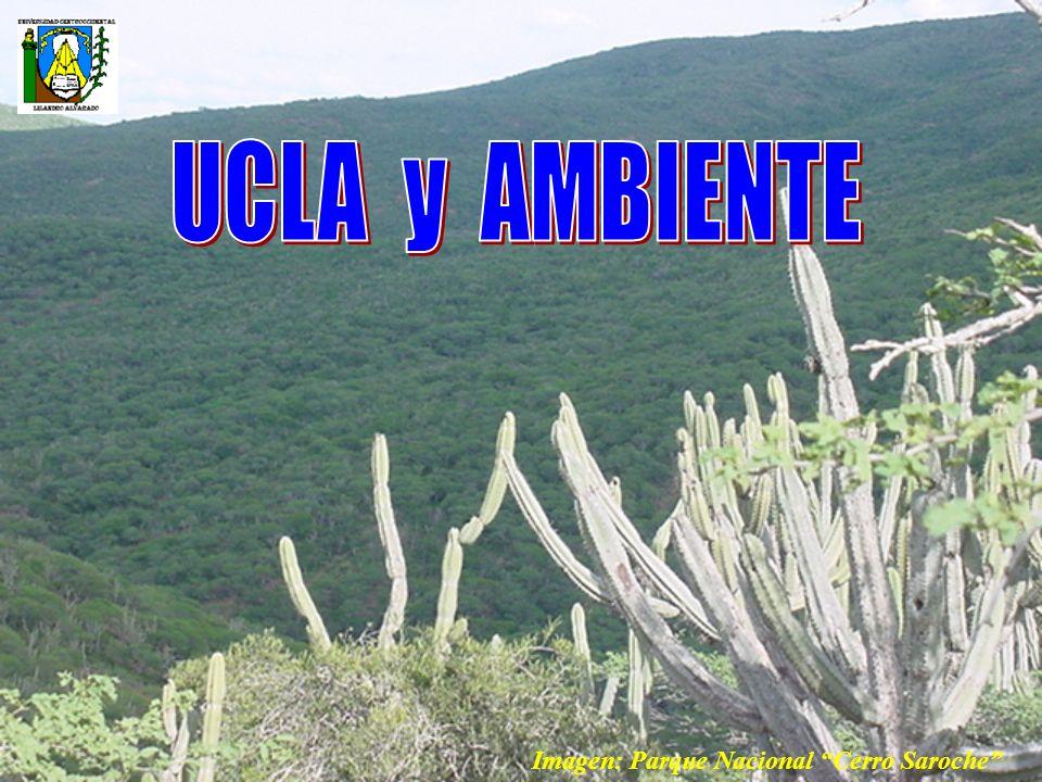 UCLA y AMBIENTE Imagen: Parque Nacional Cerro Saroche