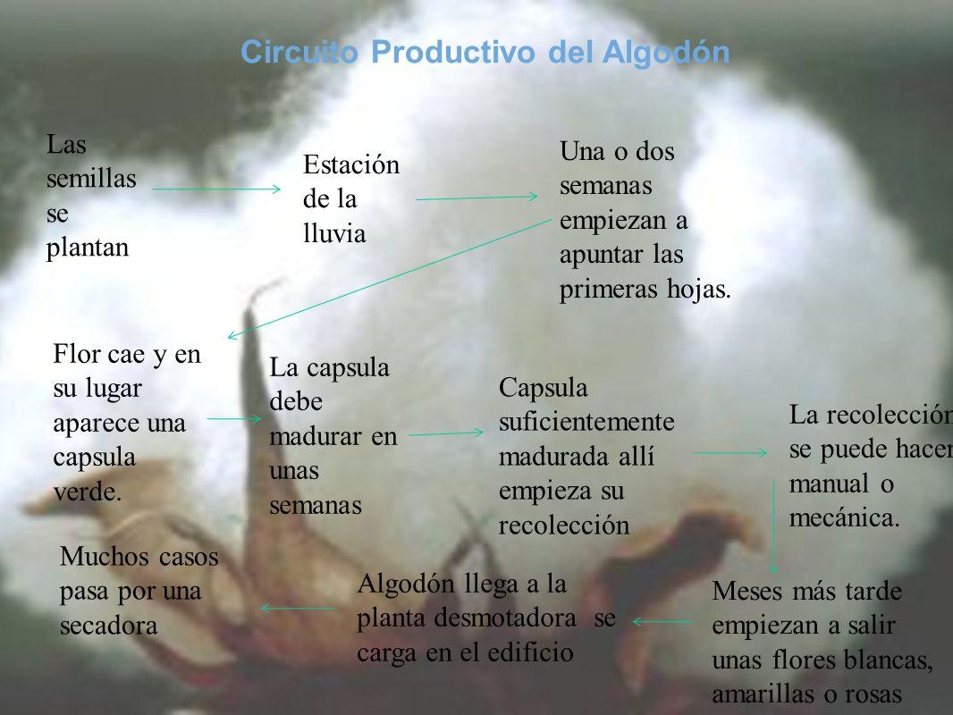 Circuito Productivo del Algodón