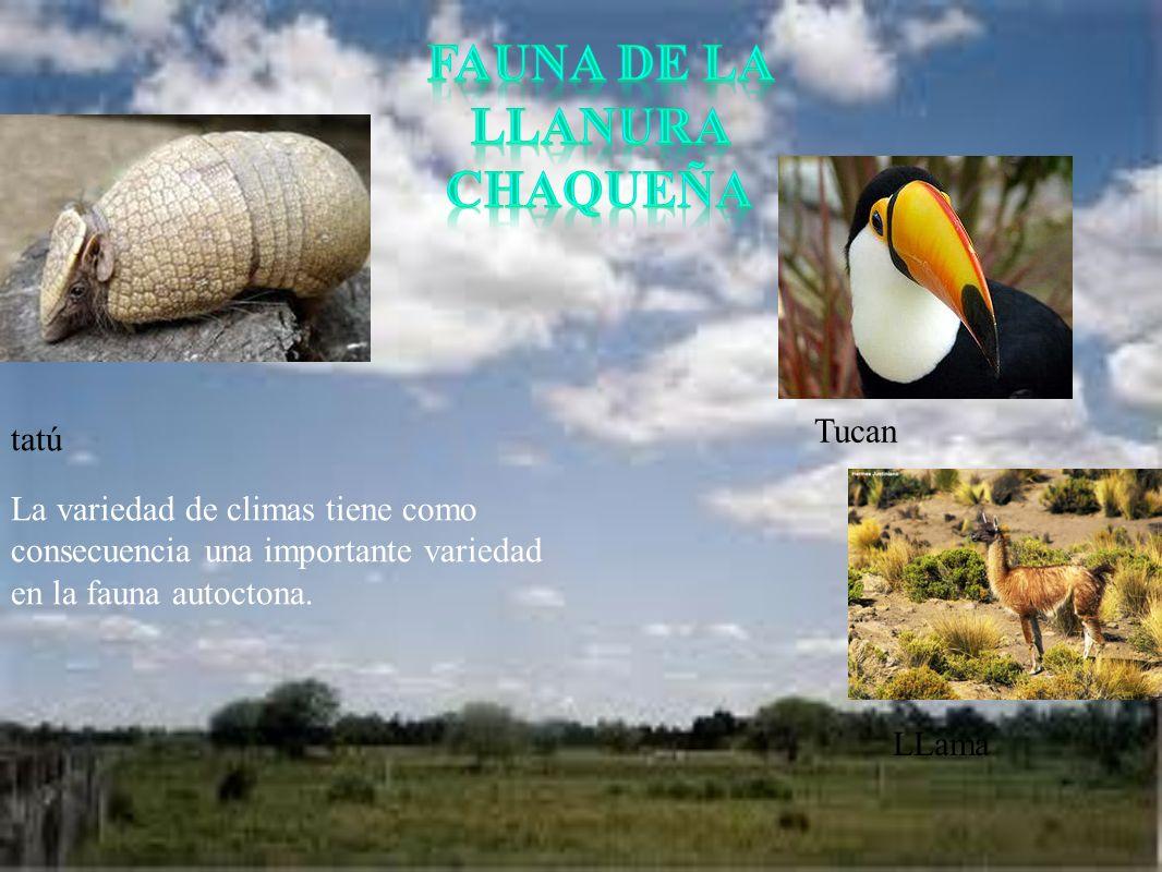 Fauna de la llanura chaqueña