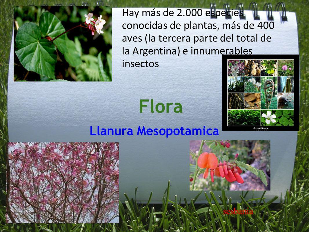 Flora Llanura Mesopotamica