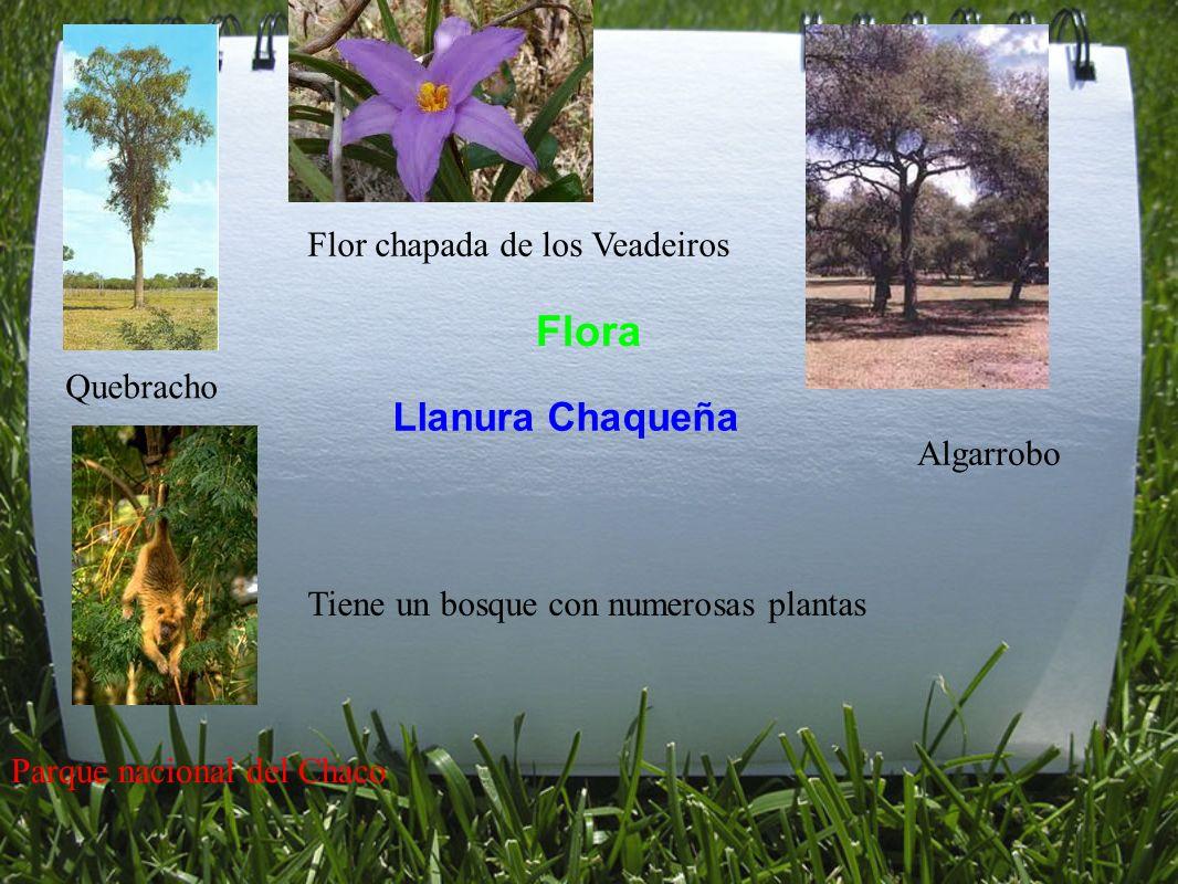 Flora Llanura Chaqueña Flor chapada de los Veadeiros Quebracho