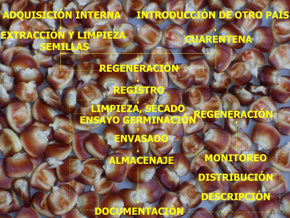 INTRODUCCIÓN DE OTRO PAÍS