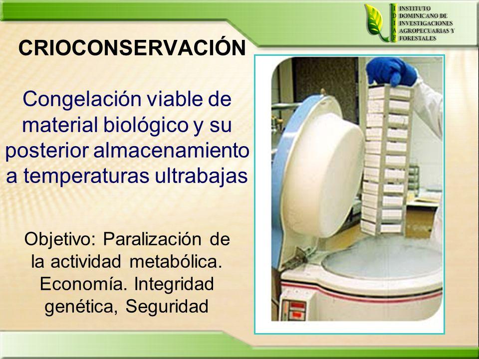 CRIOCONSERVACIÓN Congelación viable de material biológico y su posterior almacenamiento a temperaturas ultrabajas.