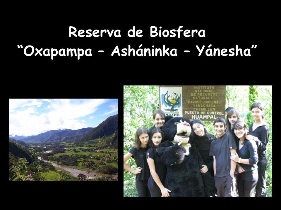 Oxapampa – Asháninka – Yánesha