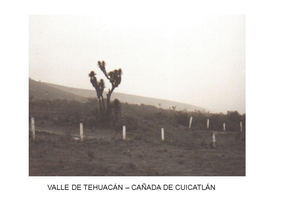 VALLE DE TEHUACÁN – CAÑADA DE CUICATLÁN