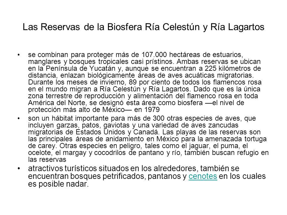 Las Reservas de la Biosfera Ría Celestún y Ría Lagartos