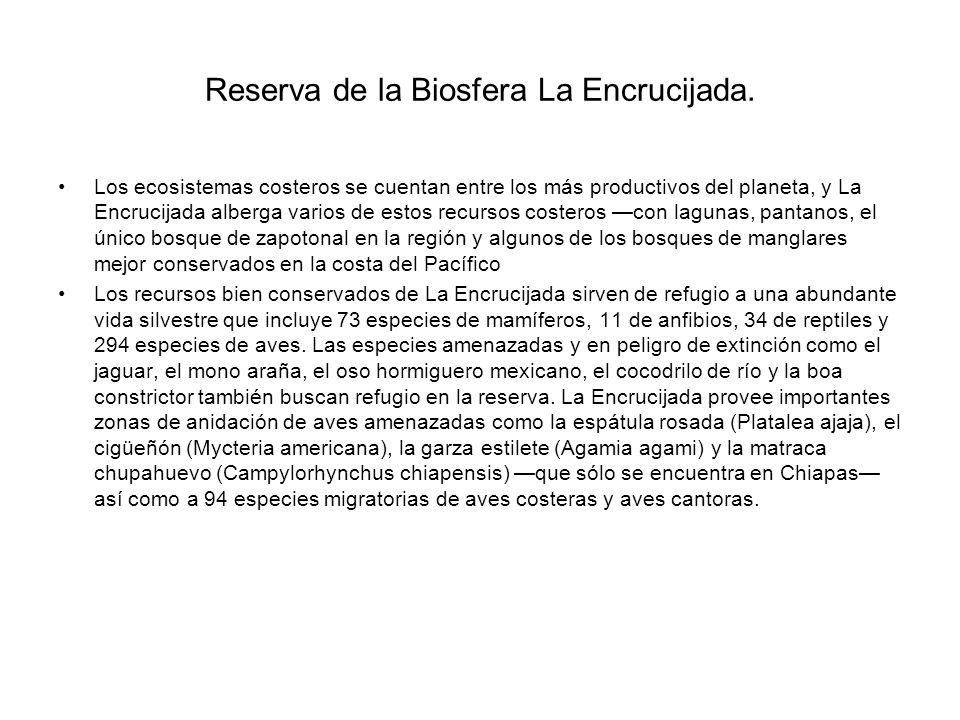 Reserva de la Biosfera La Encrucijada.