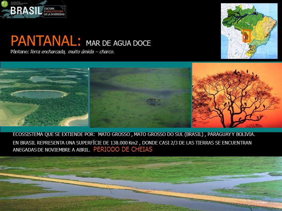 PANTANAL: MAR DE AGUA DOCE Pântano:Terra encharcada, muito úmida – charco.