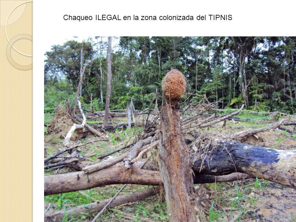 Chaqueo ILEGAL en la zona colonizada del TIPNIS
