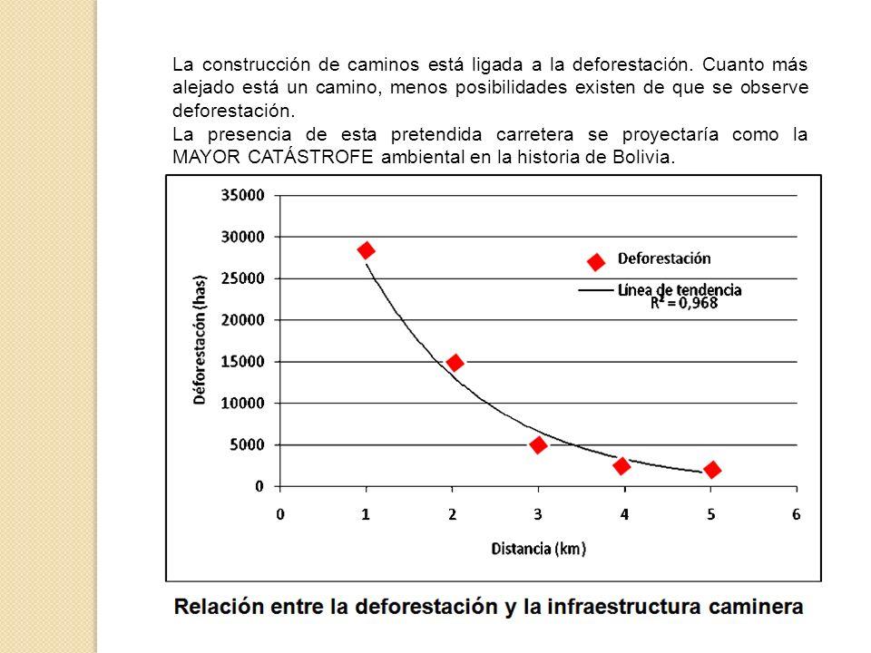 La construcción de caminos está ligada a la deforestación