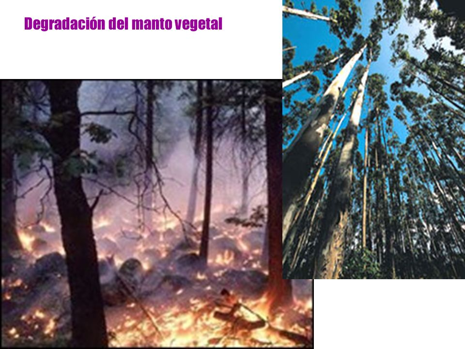 Degradación del manto vegetal
