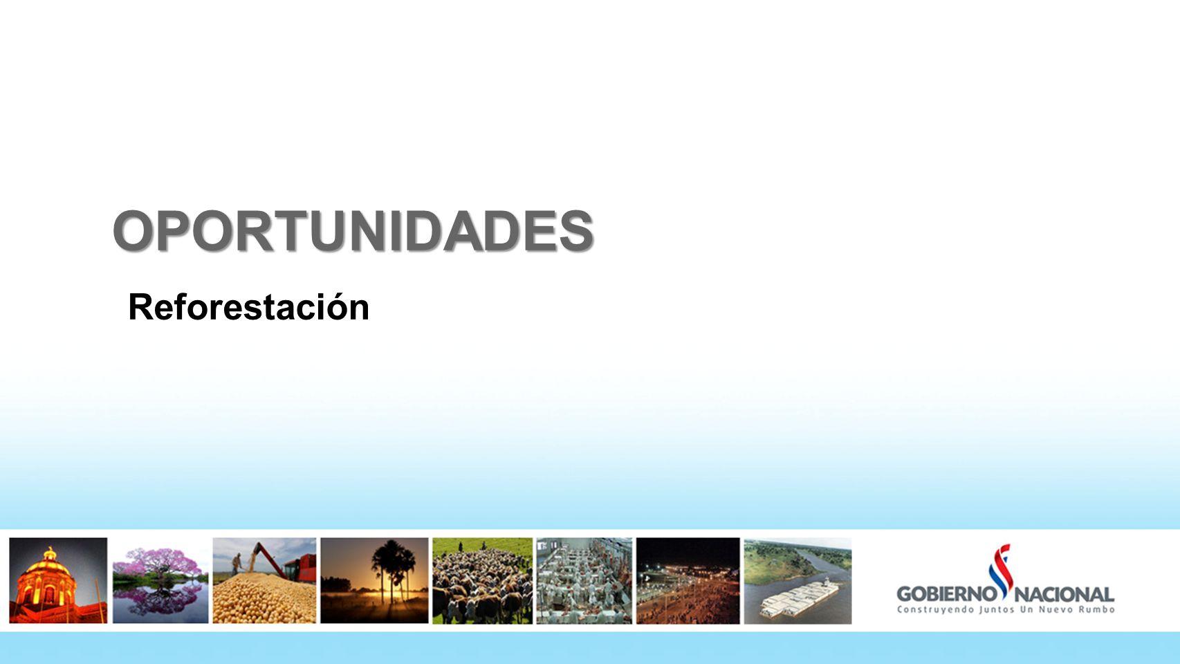 OPORTUNIDADES Reforestación 33