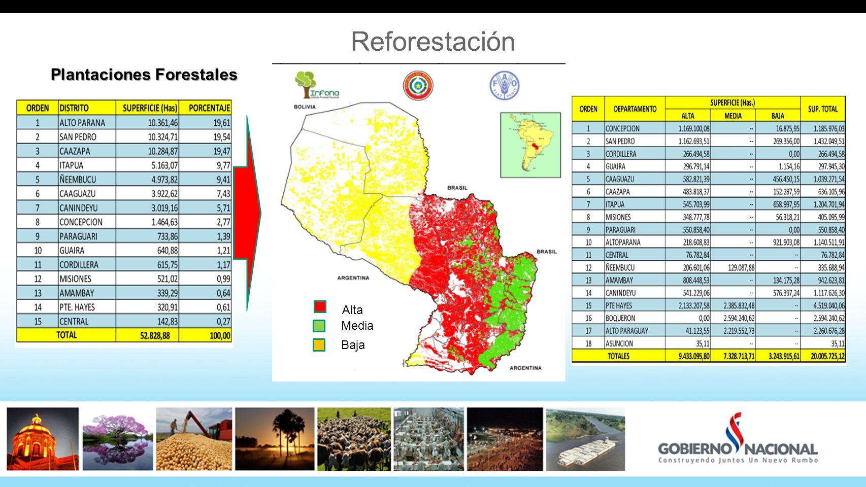 Reforestación Plantaciones Forestales Alta Media Baja 34