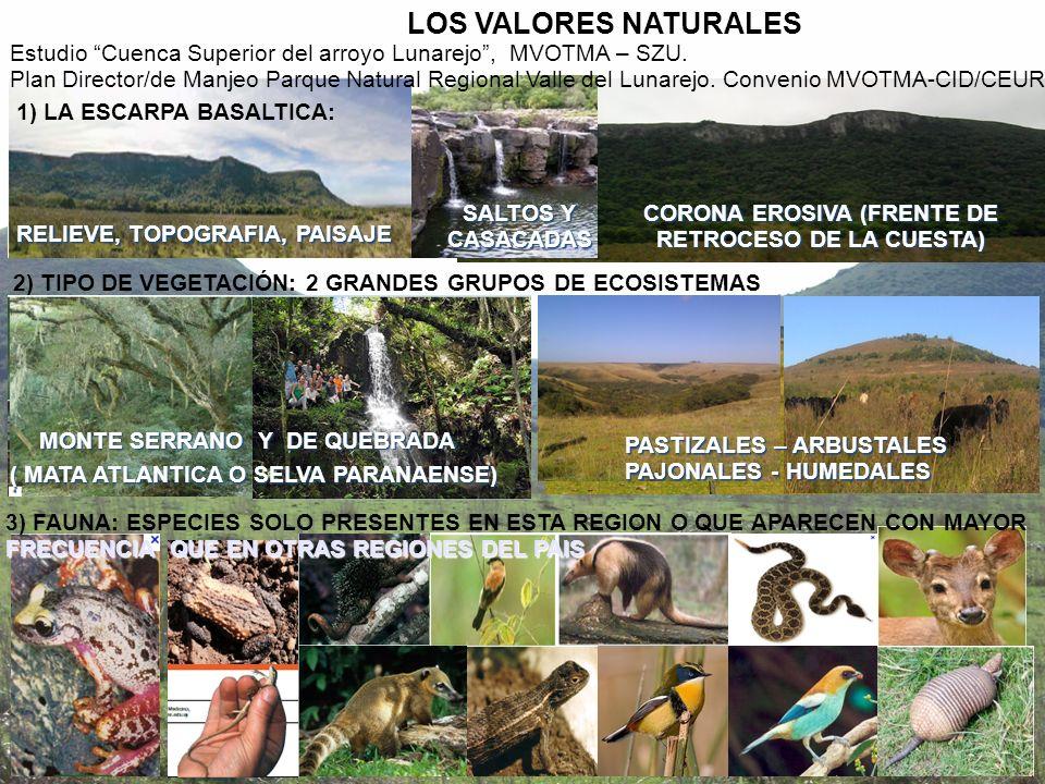 LOS VALORES NATURALES Estudio Cuenca Superior del arroyo Lunarejo , MVOTMA – SZU.