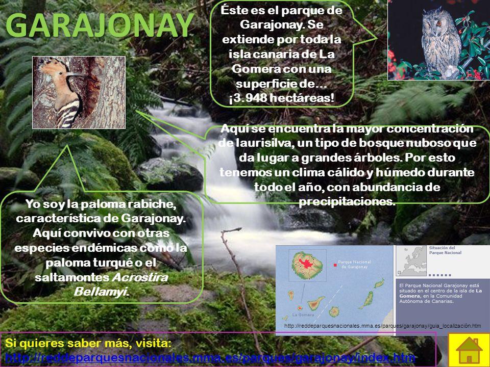GARAJONAY Éste es el parque de Garajonay. Se extiende por toda la isla canaria de La Gomera con una superficie de… ¡3.948 hectáreas!