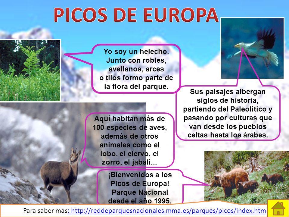 ¡Bienvenidos a los Picos de Europa! Parque Nacional desde el año 1995.