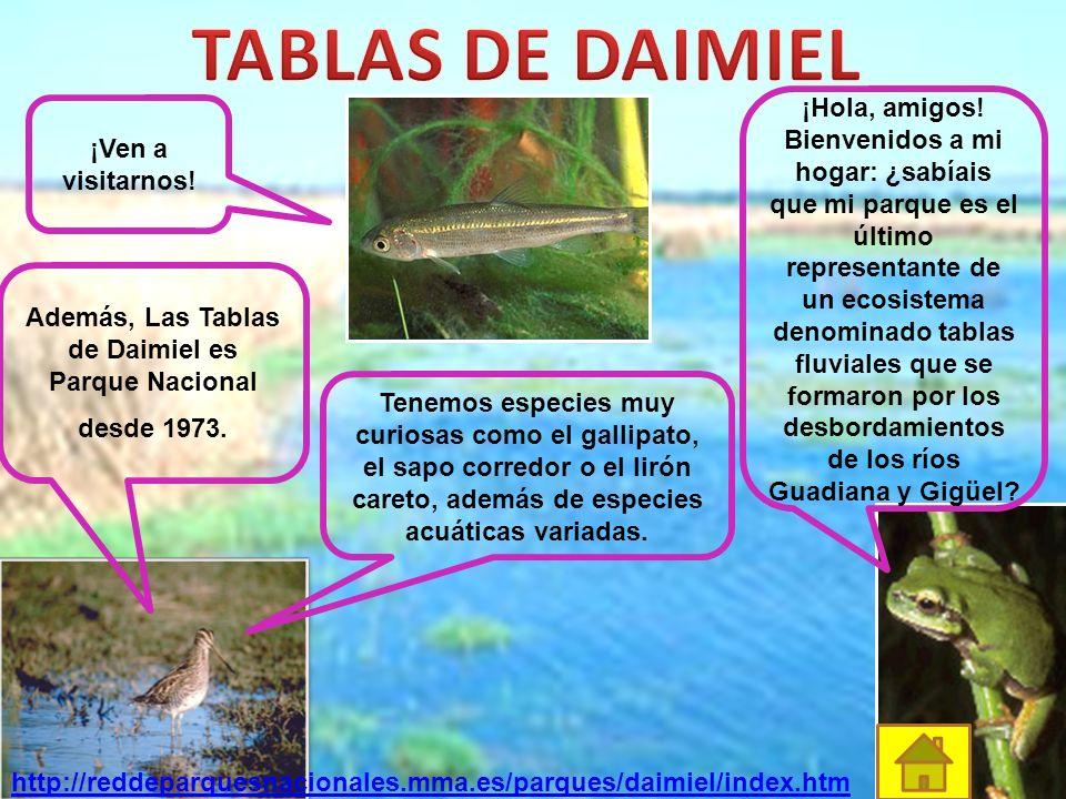 Además, Las Tablas de Daimiel es Parque Nacional desde 1973.