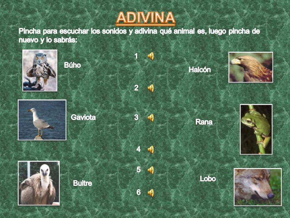ADIVINA Pincha para escuchar los sonidos y adivina qué animal es, luego pincha de nuevo y lo sabrás: