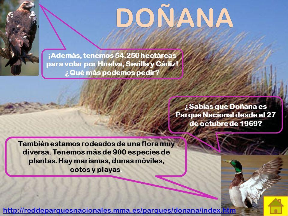 ¿Sabías que Doñana es Parque Nacional desde el 27 de octubre de 1969